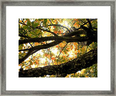 Beneath The Autumn Wolf River Apple Tree Framed Print by Angie Rea