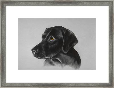 Black Labrador Framed Print by Patricia Ivy