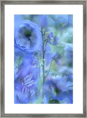Blue Delphinium Framed Print by Bonnie Bruno