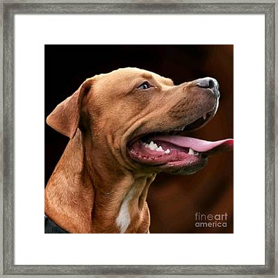 Blue The Rhodesian Framed Print by Isabella Abbie Shores