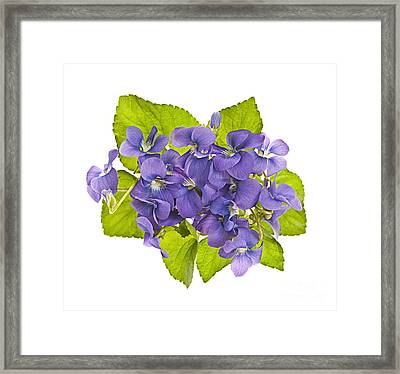 Bouquet Of Violets Framed Print by Elena Elisseeva