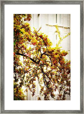 Branch Of Heaven Framed Print by La Rae  Roberts