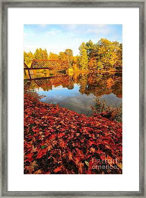 Burst Of Colors Framed Print by Catherine Reusch  Daley