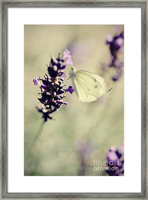 Butterfly.. Framed Print by LHJB Photography