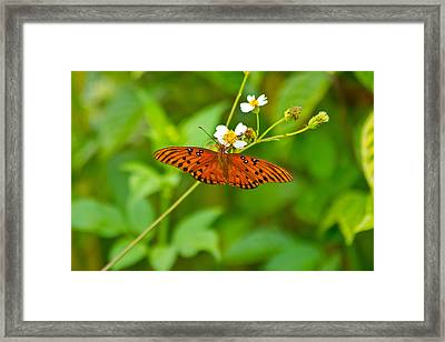 Butterfly Framed Print by Wild Expressions Photography
