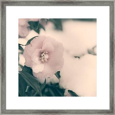 Camellia Framed Print by Joana Kruse