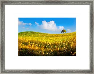 Canola Field With Tree Framed Print by Mal Bray
