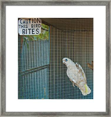 Caution This Bird Bites Framed Print by Paul Donohoe