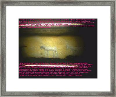 Christmas Calf And Penny  Framed Print by Phillip H George