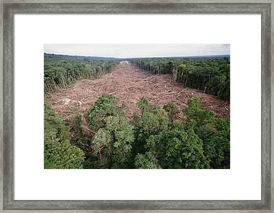 Clearing Of Tropical Rainforest South Framed Print by Gerry Ellis