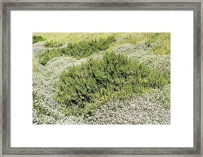 Coastal Vegetation Framed Print by Adrian Bicker