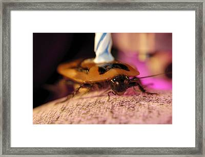 Cockroach Locomotion Study Framed Print by Volker Steger