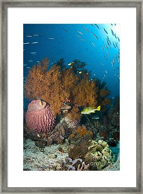 Colorful Reef Scene With Coral Framed Print by Mathieu Meur