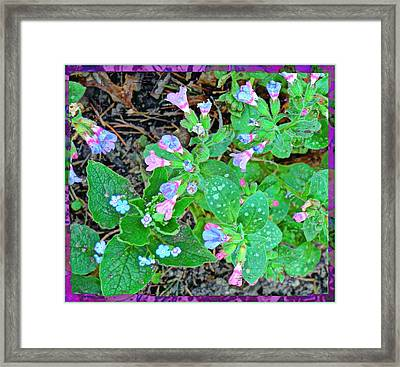 Consider The Lilies Framed Print by Mindy Newman