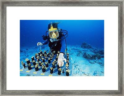 Coral Bleaching Research Framed Print by Alexis Rosenfeld