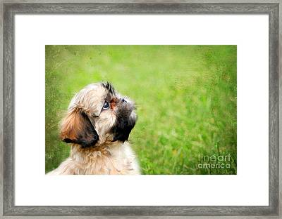 Curious Puppy Framed Print by Darren Fisher