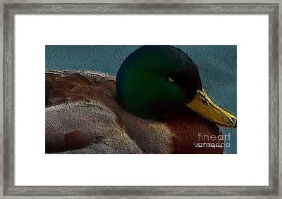 Dad's Mallard Duck Framed Print by Lisa  Ridgeway
