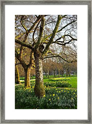 Daffodils In St. James's Park Framed Print by Elena Elisseeva