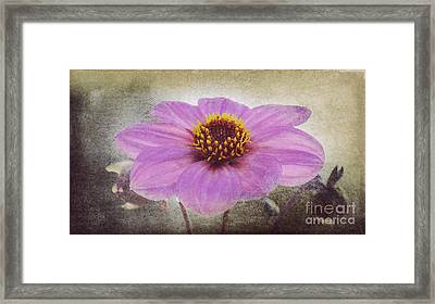 Dahlia Impression Framed Print by Angela Doelling AD DESIGN Photo and PhotoArt