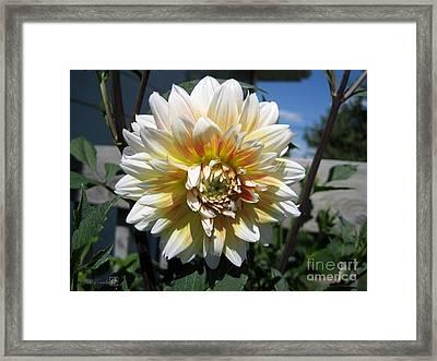 Dahlia Named Peaches-n-cream Framed Print by J McCombie