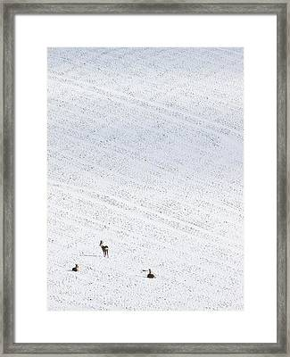 Deer In A Distant Snow Covered Field Framed Print by Adrian Bicker
