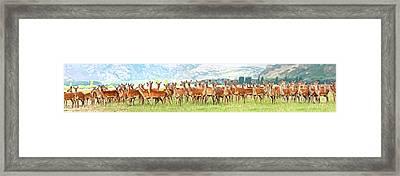 Deers Framed Print by MotHaiBaPhoto Prints