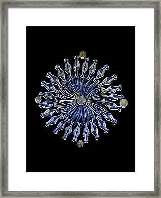 Diatoms, Light Micrograph Framed Print by Frank Fox