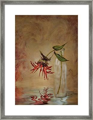 Discovery Framed Print by Robin-lee Vieira