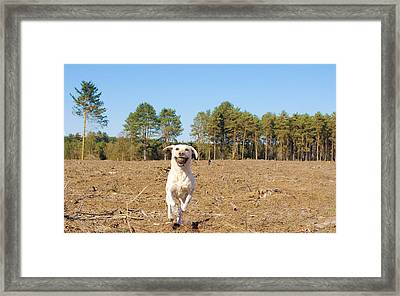 Dog Framed Print by Tom Gowanlock