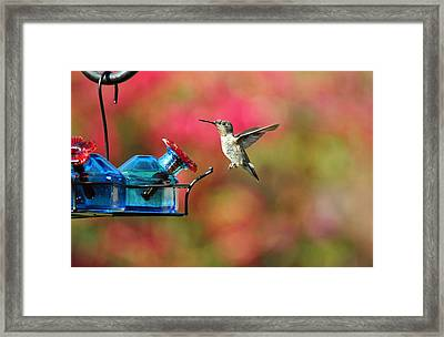 Dropping In Framed Print by Lynn Bauer