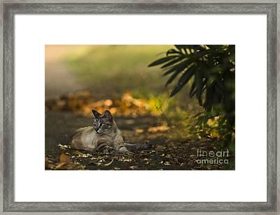 Evening Glow Framed Print by Kim Henderson