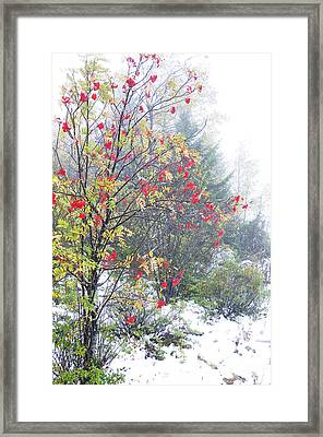 Fall Color And Snow  Framed Print by Thomas R Fletcher