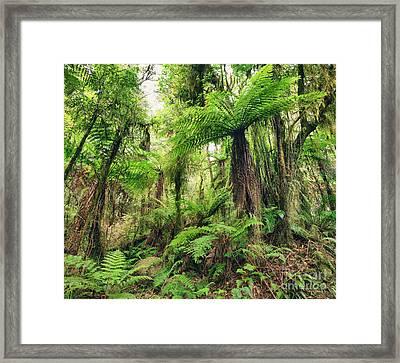 Fern Tree Framed Print by MotHaiBaPhoto Prints