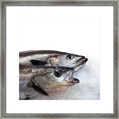 Fish On Ice Framed Print by Jane Rix