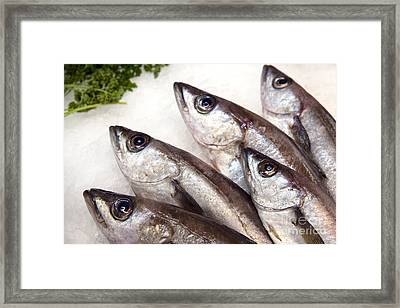 Fishes Framed Print by Jane Rix