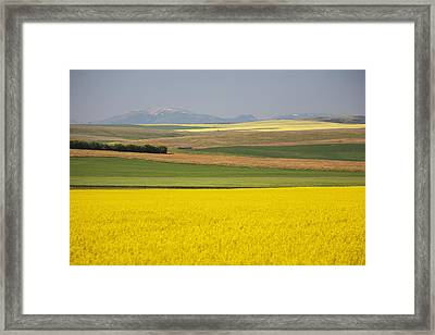 Flowering Canola Fields Mixed With Framed Print by Michael Interisano