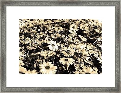 Flowers In Sepia Tone Framed Print by Sumit Mehndiratta