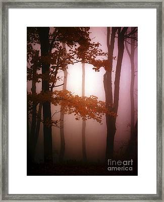 Foggy Misty Trees Framed Print by Mike Nellums