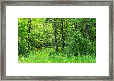 For Tori Framed Print by Anna Villarreal Garbis