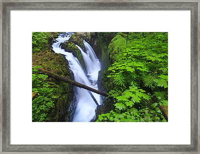 Forest And Stream In The Olympic Forest Framed Print by Gavriel Jecan