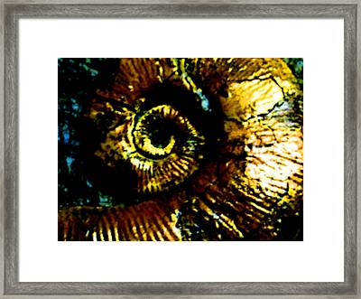 Fossil Framed Print by Howard Perry