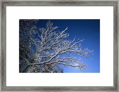 Fresh Snowfall Blankets Tree Branches Framed Print by Tim Laman
