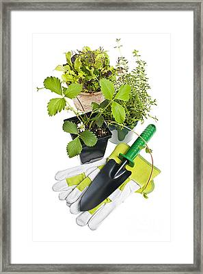Gardening Tools And Plants Framed Print by Elena Elisseeva
