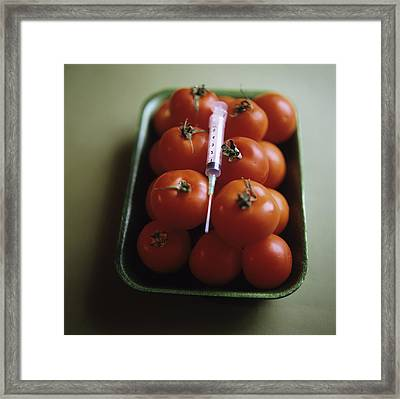 Genetically Modified Tomatoes Framed Print by Cristina Pedrazzini