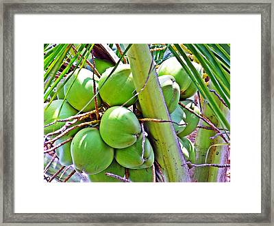Gone Nuts Framed Print by Peter P G