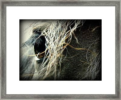 Gracie Framed Print by Kim Galluzzo Wozniak