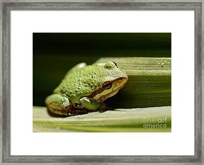 Green Frog Framed Print by Mitch Shindelbower