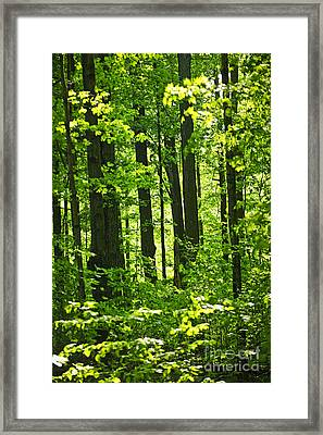 Green Spring Forest Framed Print by Elena Elisseeva