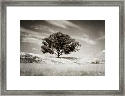 Hill Top Beauty Framed Print by Scott Pellegrin