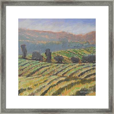 Hillside Vineyard Framed Print by Kip Decker